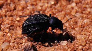 beetle-e1453722733740